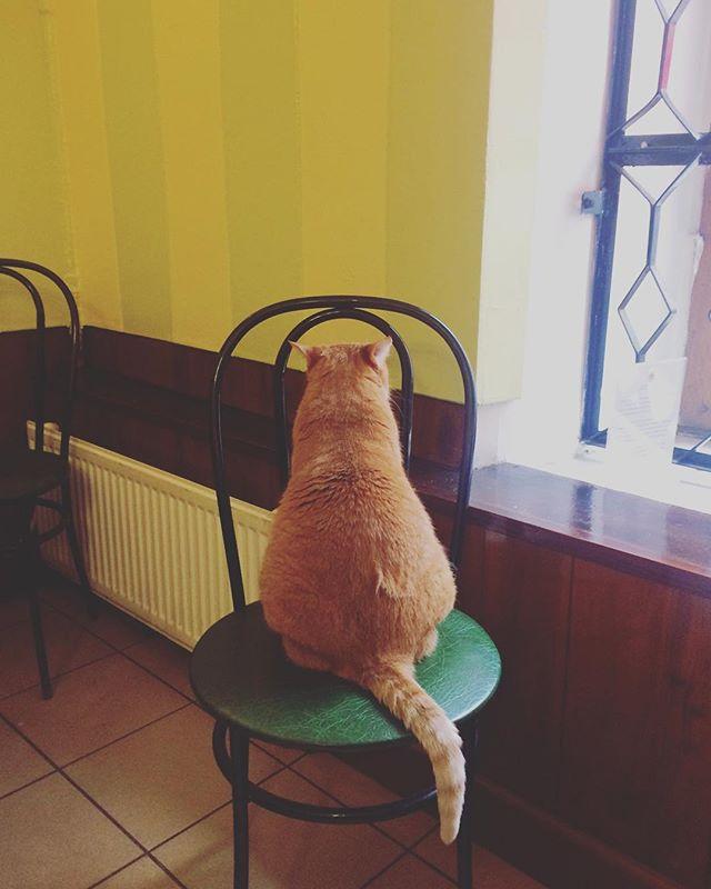 пышечная кот рыжик